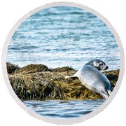Sweet Seal Round Beach Towel by Cheryl Baxter