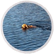 Round Beach Towel featuring the photograph Swimming Cocker by Marc Philippe Joly