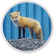Round Beach Towel featuring the photograph Sydney Fox by Jason Lees