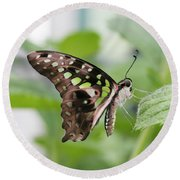 Tailed Jay Butterfly #3 Round Beach Towel