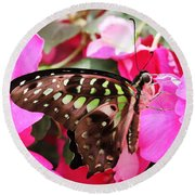 Tailed Jay Butterfly #4 Round Beach Towel