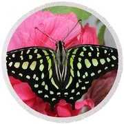Round Beach Towel featuring the photograph Tailed Jay Butterfly #6 by Judy Whitton