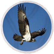 Take Flight Round Beach Towel by Mike  Dawson