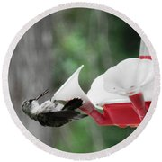 Baby Hummingbird Taking It Easy Round Beach Towel by Belinda Lee