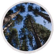 Talls Trees Yosemite National Park Round Beach Towel