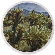 Teddy Bear Cholla Cactus In California 0274 Round Beach Towel