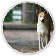 Round Beach Towel featuring the photograph Temple Dog by Nola Lee Kelsey