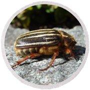 Ten-lined June Beetle Profile Round Beach Towel