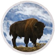 Teton Bison Round Beach Towel by Mark Kiver