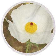 Texas Prickly Poppy Wildflower Round Beach Towel