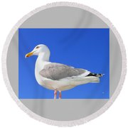 Round Beach Towel featuring the photograph The Admiral by Will Borden