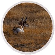 The Antelope Digital Art Round Beach Towel