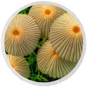 Round Beach Towel featuring the photograph The Ants Raised Their Umbrellas by Dennis Baswell