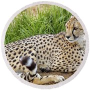 The Beautiful Cheetah Round Beach Towel