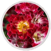 The Beauty Of Carpet Roses  Round Beach Towel