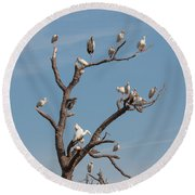 The Bird Tree Round Beach Towel by John M Bailey