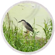 The Black-crowned Night Heron Round Beach Towel
