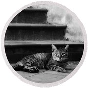 Round Beach Towel featuring the photograph The Boss by Laura Melis