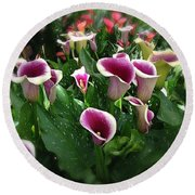 The Calla Lilies Are In Bloom Again Round Beach Towel by Mark David Gerson