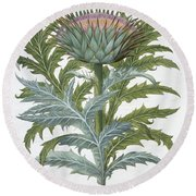 The Cardoon, From The Hortus Round Beach Towel by German School