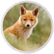 The Face Of Innocence _ Red Fox Kit Round Beach Towel