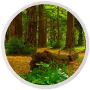 The Forest Of Golden Gate Park Round Beach Towel