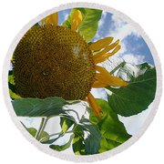 The Gigantic Sunflower Round Beach Towel