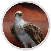 Round Beach Towel featuring the photograph The Glory Of An Eagle by Holly Kempe