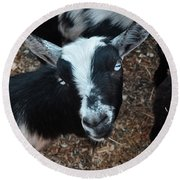 Round Beach Towel featuring the photograph The Goat With The Gorgeous Eyes by Verana Stark
