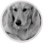 The Golden Retriever Round Beach Towel