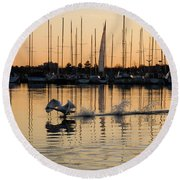 The Golden Takeoff - Swan Sunset And Yachts At A Marina In Toronto Canada Round Beach Towel