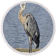 The Great Blue Heron Photo Round Beach Towel