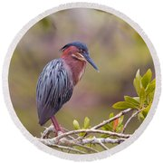 The Green Heron At Blue Hole Round Beach Towel