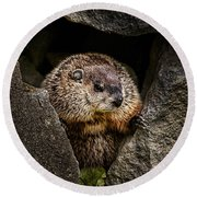 The Groundhog Round Beach Towel by Bob Orsillo