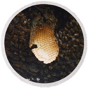 The Hive  Round Beach Towel by Shawn Marlow
