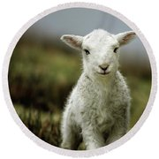 The Lamb Round Beach Towel by Angel  Tarantella