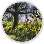 Round Beach Towel featuring the photograph The Learning Tree by Daniel Sheldon