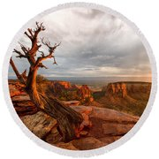 The Light On The Crooked Old Tree Round Beach Towel