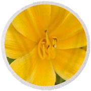 Round Beach Towel featuring the photograph The Lily From Kentucky by Verana Stark