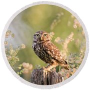 The Little Owl Round Beach Towel