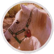 Round Beach Towel featuring the photograph The Little White Pony by Dora Sofia Caputo Photographic Art and Design