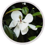 The Magnolia Bloom  Round Beach Towel by James C Thomas