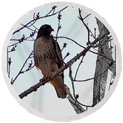 The Majestic Hawk Round Beach Towel