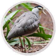 The Masked Lapwing Vanellus Miles Previously Known As The Mask Round Beach Towel by Alex Grichenko
