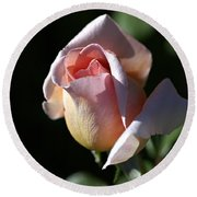 The Morning Pink Rose Round Beach Towel