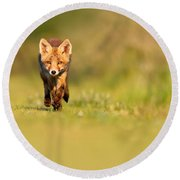 The New Kit On The Grass - Red Fox Cub Round Beach Towel