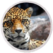 Round Beach Towel featuring the photograph The Ole Leopard Don't Change His Spots by Lynn Sprowl