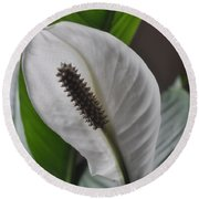 Round Beach Towel featuring the photograph The Peace Lily by Verana Stark