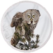 The Perching Prince Round Beach Towel by Heather King