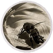 The Pollinator Round Beach Towel by Chris Berry